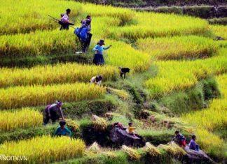 Randonnee dans la reserve Pu Luong