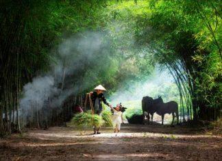 circuit au vietnam du nord