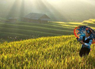 Voyage au Vietnam en automne 2
