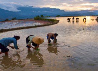 Hoang Su Phi au Vietnam 1