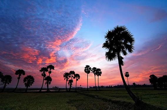 Province d'An Giang le pays des Palmiers 1