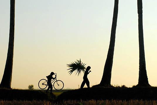 Province d'An Giang le pays des Palmiers 6