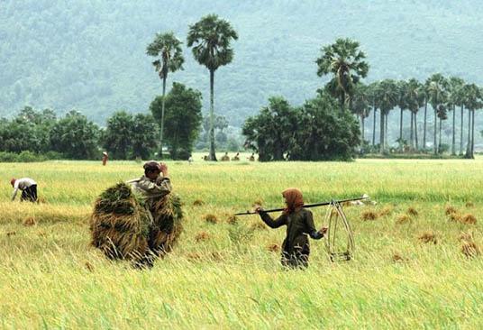 Province d'An Giang le pays des Palmiers 8