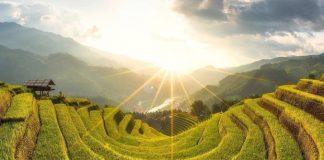 Oùvisiter les rizières en terrasses au Vietnam
